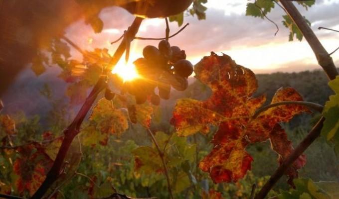 Degustazione Amarone - Locanda Aurilia