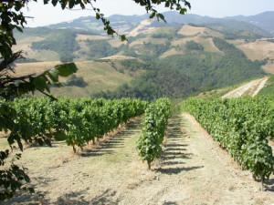 Locanda Aurilia - Degustazione vini Azienda Castelluccio